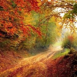 [185] Balade d'automne